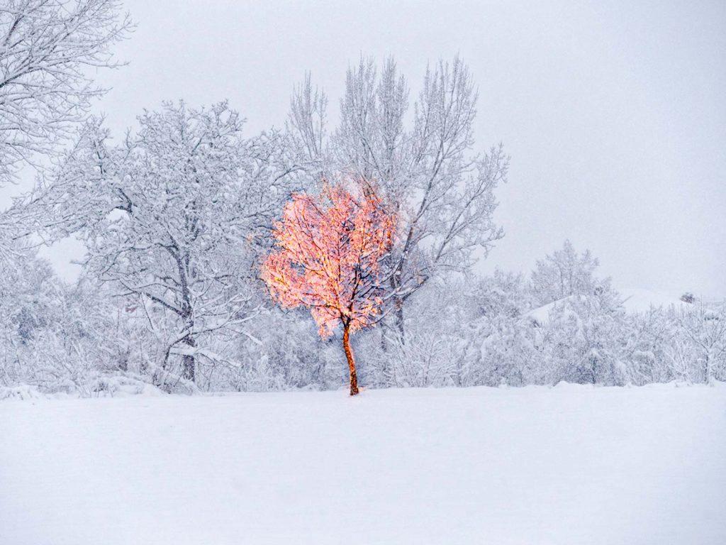 Fotografie de Dumitru Ungureanu