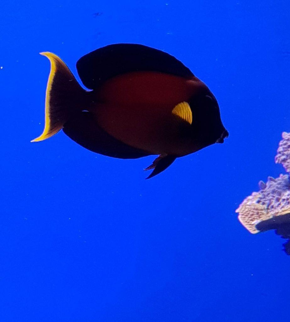 Un acvariu de vis – Palma de Mallorca © foto Peter Sragher