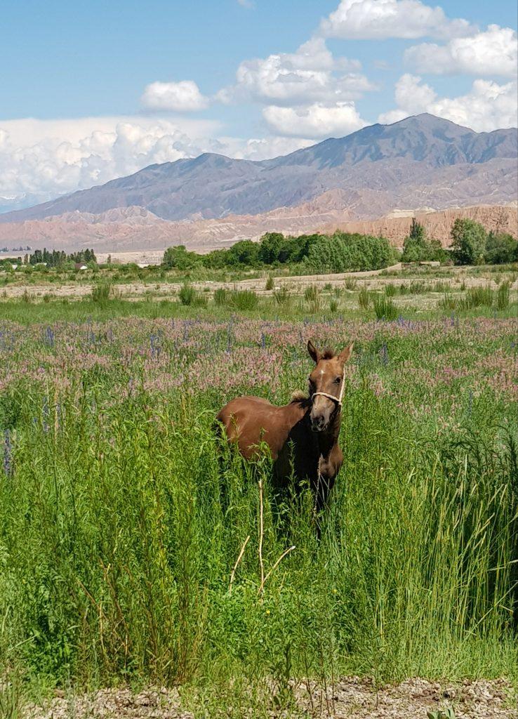 Kârgâzstan – țara munților fără sfârșit © Peter Sragher