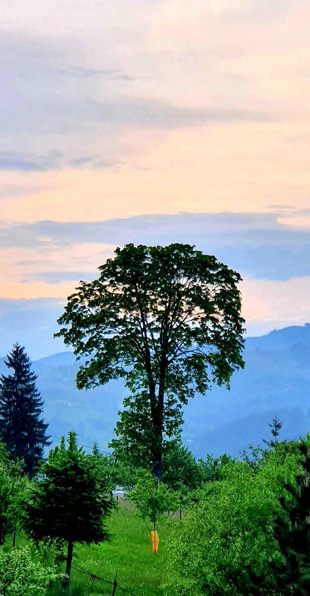 Arborele © foto Peter Sragher